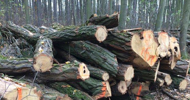 Kácení suchých a nemocných stromů v těchto dnech čeká les mezi Modřany a Kamýkem. (Ilustrační foto)