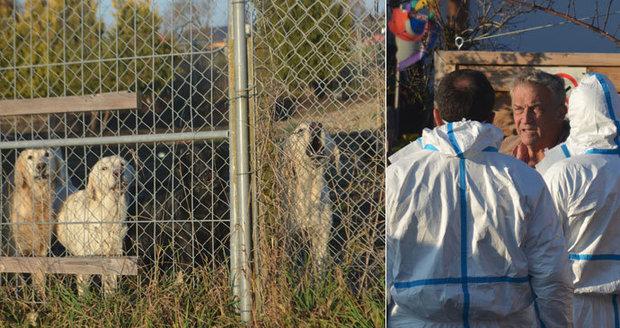 Blesk tlapky pomohly rozkrýt množírnu psů. Desítky zanedbaných zvířat měly putovat do Česka