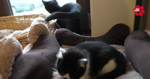 Libuše dala životní úspory do azylu pro týrané kočky. Zvířata svěřuje jen prověřeným lidem