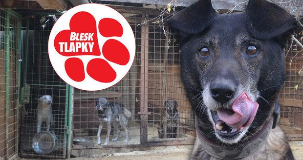 Tohle je psí domov důchodců. V Lukavici už pomohli 8 tisícům zvířat