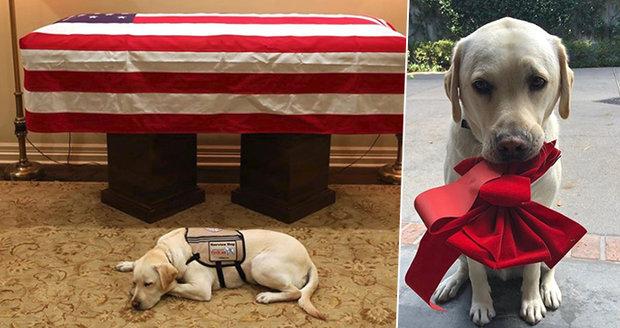 Snímky truchlícího psa George Bushe staršího (†94) dojaly celý svět: Pes se od pána nehnul ani po jeho smrti