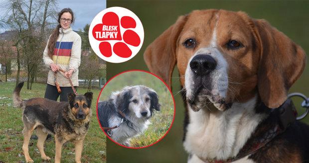 Iva pomáhá odloženým psům. Než postaví azyl, propůjčila jim vlastní dům