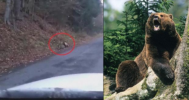 Šokovaná posádka viděla smrti do chřtánu: Drsný medvědí útok zachytila na video!