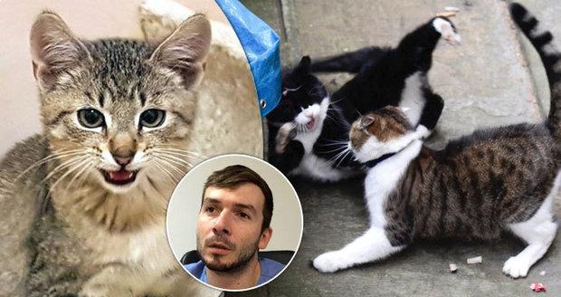 """Zákeřný """"kočičí HIV"""": Hlavním zdrojem nákazy jsou kocouří šarvátky, řekl veterinář z Prahy"""