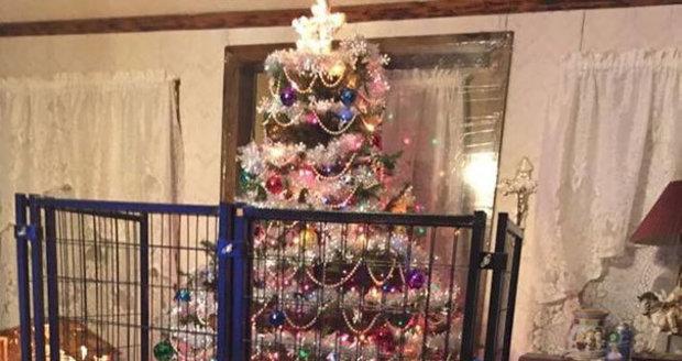 Stromeček za mřížemi nebo u stropu! Takhle vypadají domácnosti, kde vládnou domácí mazlíčci