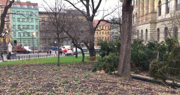 Čelakovského sady mají zcela novou podobu, nepřehledný prostor je minulostí.