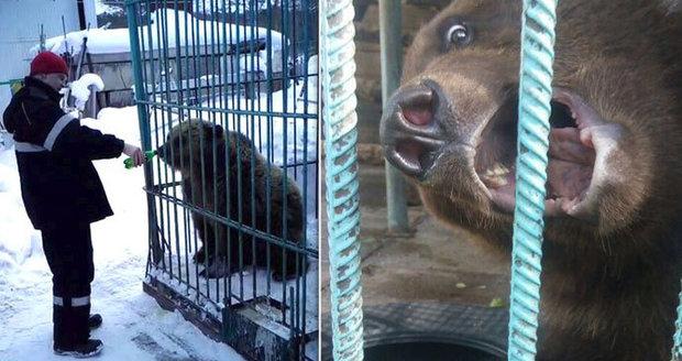 Medvěd řádil na vánočním večírku: Šelma uhryzla nebohé návštěvnici ruku!