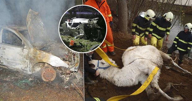 Utrhané prsty, opilá dívenka (14), pád ze skály i velbloud v rybníku: Záchranáři se o Silvestru nenudili
