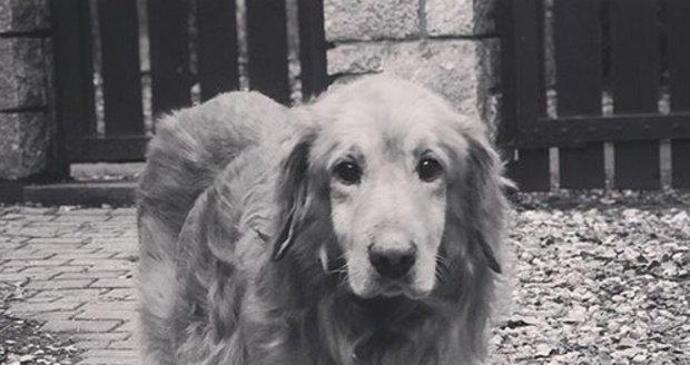 Libor Bouček a jeho pes, který zemřel