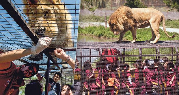 Safari v Chile: Místo zvířat jsou v klecích lidé