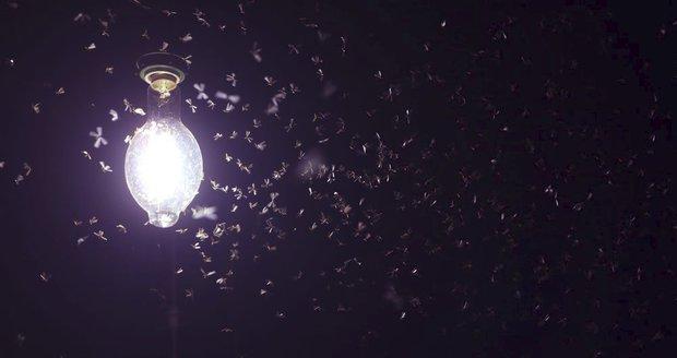 Od půlnoci do úsvitu vypnout lampy. Odborníci mají plán, jak zachránit hmyz
