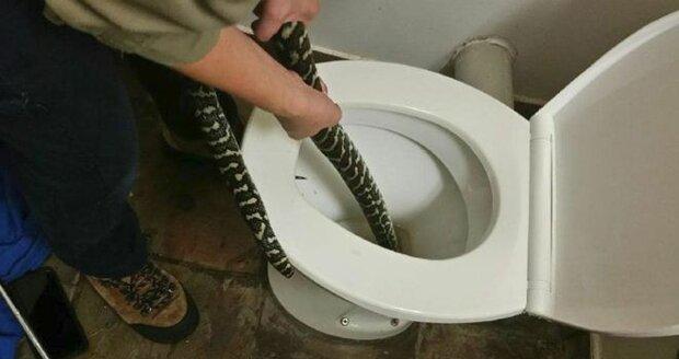 Ženu kousla krajta, když seděla na záchodě. Had se tam schovával před vedrem