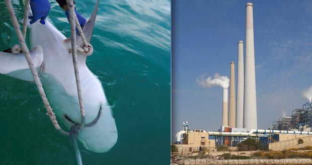 Žraloci milují elektrárnu: Ohřívá jim vodu a pomáhá s rozmnožováním