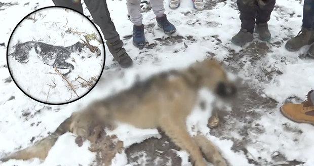 Oběšení, umlácení kamenem nebo kladivem: Děti v romské osadě zabíjejí a týrají psy