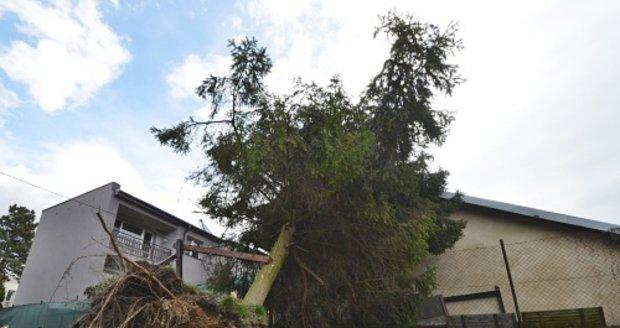 V pondělí kolem poledne zasahovali hasiči v Ostravě-Mariánských Horách v Kubelíkově ulici u vyvráceného smrku, asi 10 metrů vysokého. Zůstal opřený o menší zděný domek.