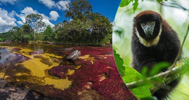 Úchvatná kolumbijská »řeka pěti barev«: Krása pod dohledem vojáků