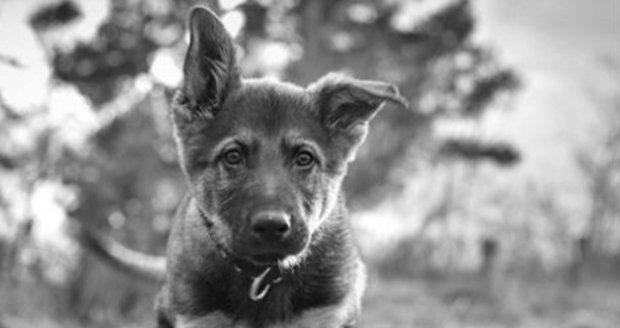Snídaňové štěně Ozzy bohužel v pondělí zemřelo.