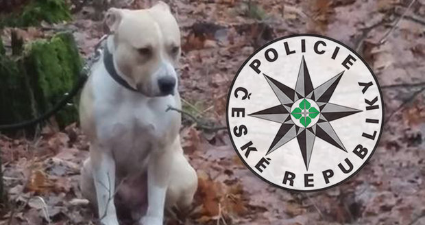 Tyran (32) uvázal psa v lese u stromu. Nechal ho napospas smrti vyhladověním