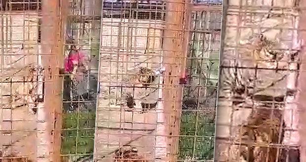Videa dívky sání péro