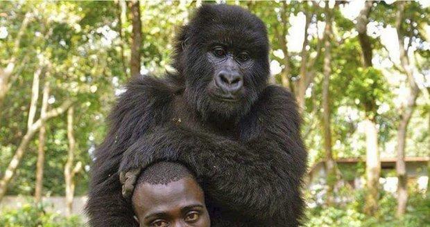Strážci národních parků v Africe to nemají lehké, odměnou jim ale bývá i vděk zvířat, která chrání.