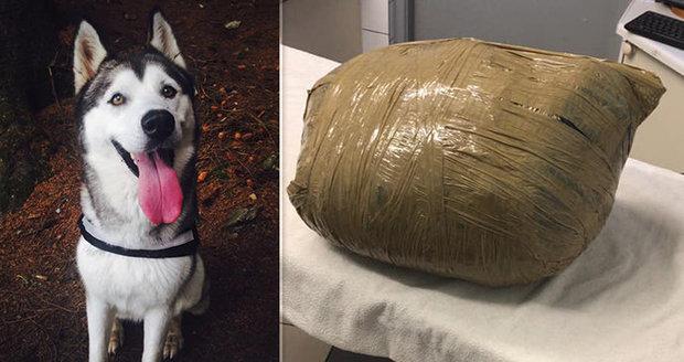 Odložila psa na hlídání, vrátil se jí mrtvý a obalený izolepou. Majitelka je v šoku