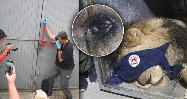 Ztýraná zvířata se konečně podařilo odvézt ze zoo smrti: Nad jejich přežitím visí otazník