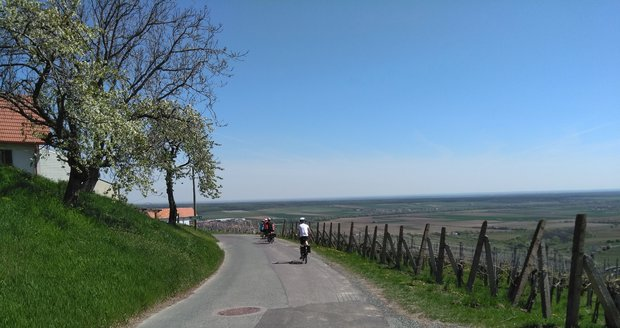 Cyklistika ve vinohradech