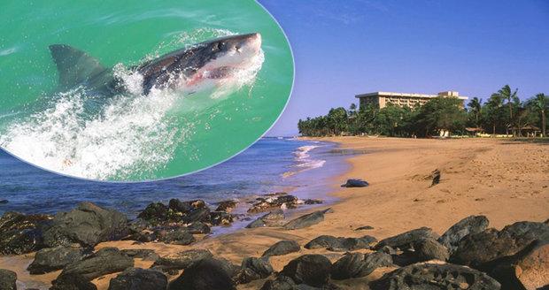 Muži (†65) utrhl v dovolenkovém ráji nohu žralok. Zoufalému boji o život přihlížela i manželka