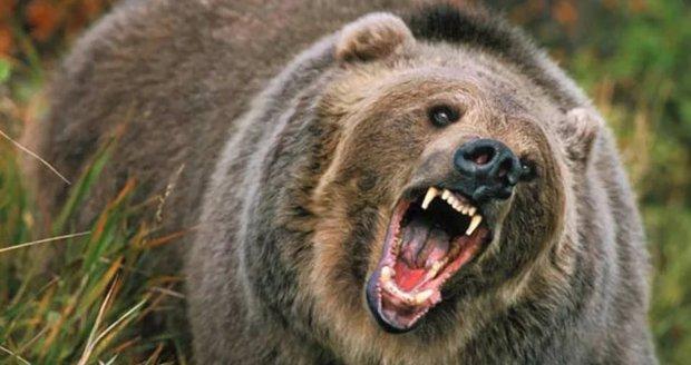 Na Břeclavsku se pohybuje medvěd. Ilustrační foto.