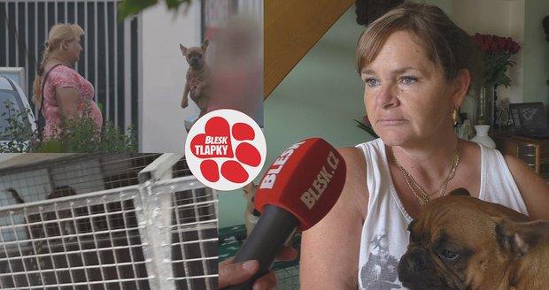 """Kšeft s """"buldočky"""": Psi trpí v klecích, množitelka Iveta za ně bere tisíce"""