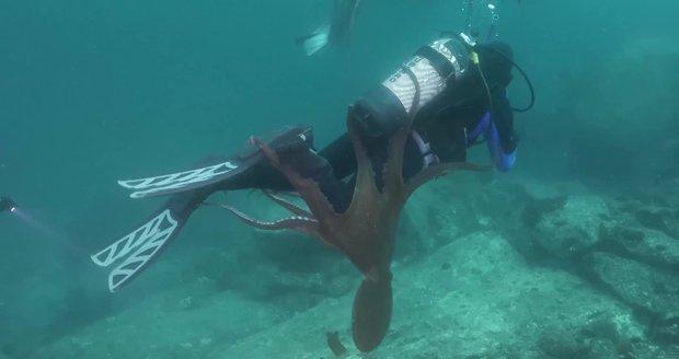 Útok obří chobotnice: Potápěč zažil krušné chvíle, chapadla ho nechtěla pustit
