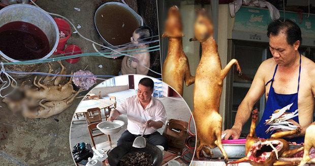 Hororový festival psího masa: Roztomilé chlupáče vaří klidně zaživa, dětem před očima