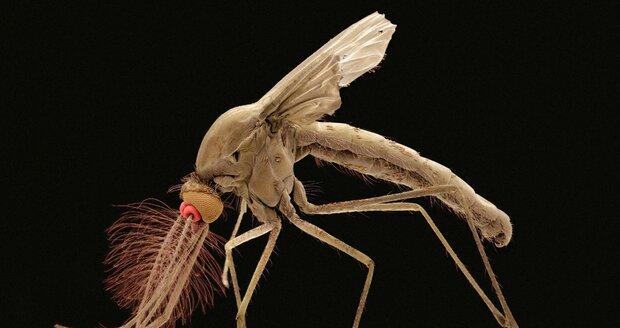 Onemocnění přenáší komár rodu Culex.