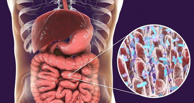 Vědci tvrdí, že střevní mikrobiom je druhý mozek.