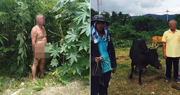 Perverzní senior si užíval v křoví s krávou: Dělají to všichni, tvrdil policistům