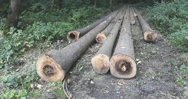 V lesoparku Na Krejcárku dojde k pokácení 100 stromů. Zejména půjde o suché a nemocné stromky. (ilustrační foto)