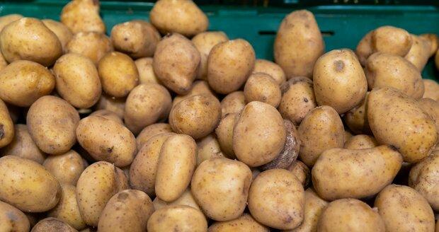 Říká se,  že čím horší sedlák, tím větší  brambory...