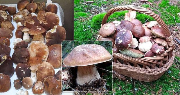 V Česku začaly houbové žně, rostou hřiby i podzimní houby. Víme, odkud přinesete plné koše