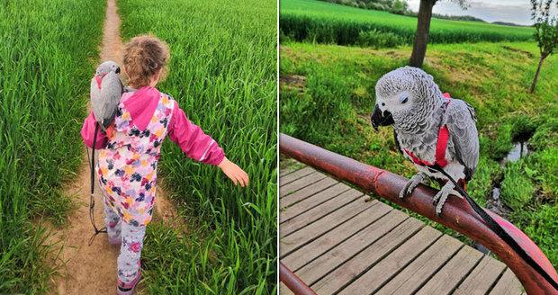 Martina zoufale pátrá po svém papouškovi: Johanku se někdo pokoušel prodat přes internet