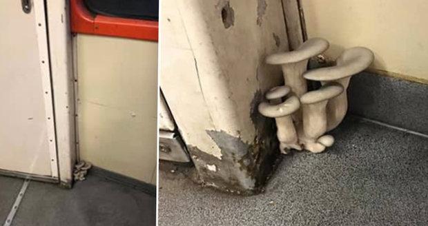 Houby rostoucí ve vlaku baví internet: České dráhy vysvětlily podivný úkaz