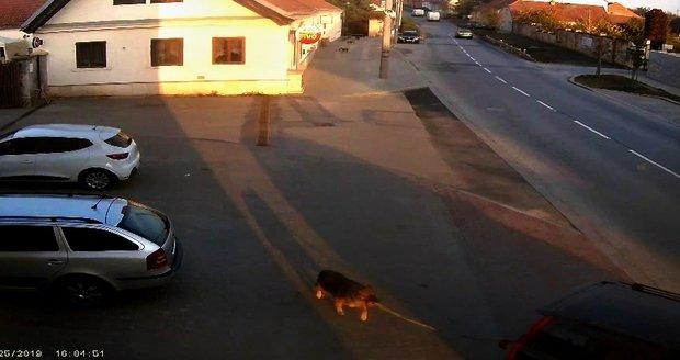 Majitel uvázal svého psa za auto a rozjel se.