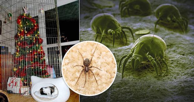 Pavouci, roztoči, brouci. Na vánočním stromečku bydlí tisíce tvorů!