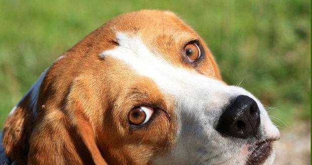 Jak chytrý je váš pes?