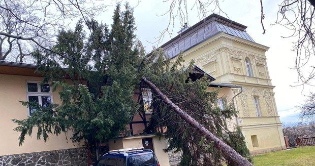 V ulici Jana Masaryka spadl strom na budovu školy, 10. února 2020.