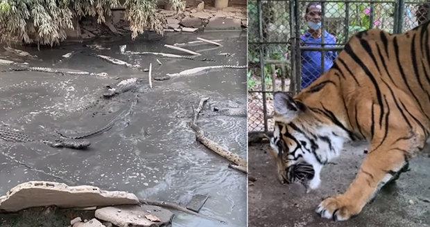 Majitel zoo kvůli koronavirové krizi zkrachoval: Zvířata nechal v klecích napospas!