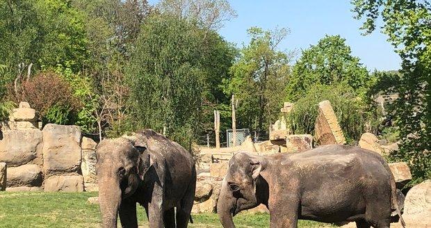 Znovuotevření Zoo Praha, 27. dubna 2020.