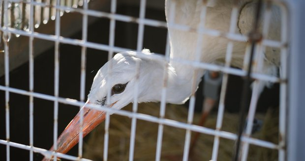 Zachráněná zvířata vypouští stanice zpět do přírody