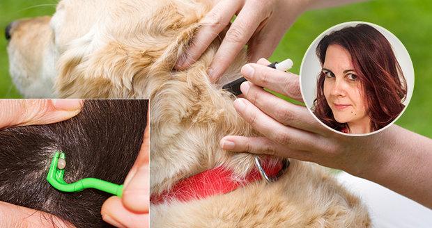 Přípravky na psy mohou být pro kočky smrtící, varuje parazitoložka.