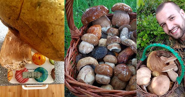 Rostou! Ale ty pravé houbařské žně podle mykologa Jaroslava Landy teprve přijdou.