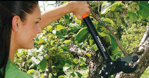 Na podzim odstraňte ze stromů suché větve, prořez nechte na konec února.